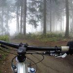 dviratininkas-vairas-miskas