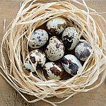Šis bei tas apie kiaušinius