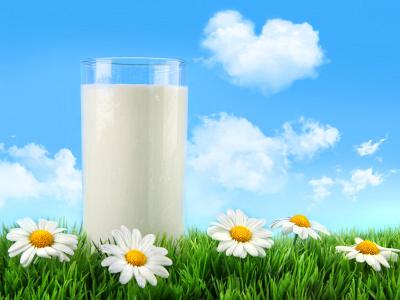 pieno-stikline-pieva-baltos-ramunes