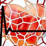 sirdis-kraujagysles-pulsas